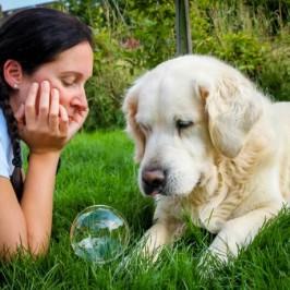 Workshop: Wohlfühlteam Mensch-Hund